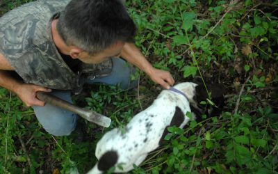 A morning of truffle hunting in Molise, the second biggest producer of truffles in Italy!